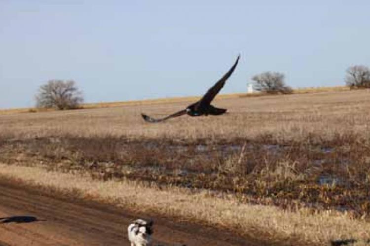 Prairie Gliders